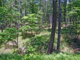 Pine/Oak  Forest