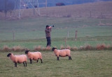 Where are the Sheeps?