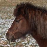 Cold Pony