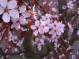 bloesem20112.jpg