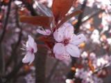 bloesem20113.jpg