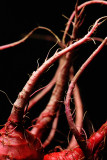 Red Tendrils