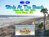 'BIRDS AT THE BEACH 2011
