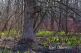 Forêt enchantée - Magic Forest