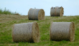 rolled hay with birds...