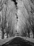 Driveway - Camosun