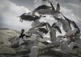 Fun with the Gulls