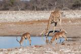 Etosha National Park, Namibia Sub-Gallery