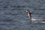 Dolphin Tail Riding