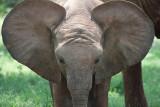 Samburu Game Reserve, Kenya