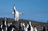 Antarctica, South Georgia Island and the Falklands