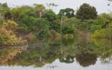 Amazon Reflections