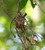 Nest on Vertical Limb