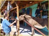 Mark feeding a burro