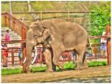 Mr. Asian Elephant