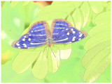 Butterfly - color sketch