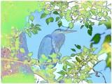 Heron - color sketch