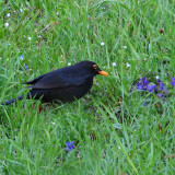 Blackbird fly...