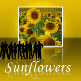 Sunflower 85