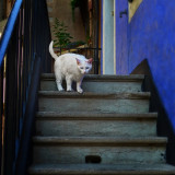 There is a new cat in the neighbourhood…