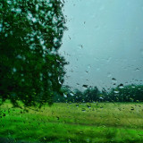 The subtle charm of summer rain...