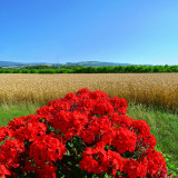Festival of summer colours...