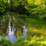 Summer morning at the fairies' pond...
