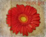 Bold red flower...