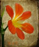 Solitary flower...