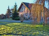 The grass is still frozen....