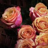 Rainy roses...