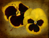 """""""And there is pansies, that's for thoughts."""""""