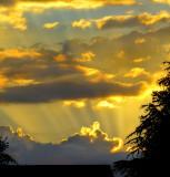 Golden sunset of early summer...