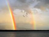 The rainbow flight...