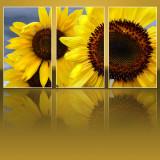 Sunflower 96