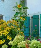 The fanciful little garden...