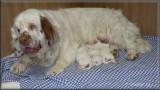 Little helen x Vojtik puppies  111221 001.jpg