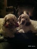 Keely and Buckley  120106 001.jpg