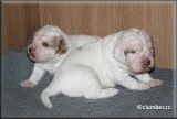 Little Helen pups  120108 016.jpg