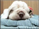 Little Helen pups  120112 001.jpg