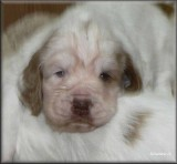 Little Helen pups  120124 006.jpg