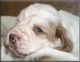 Little Helen pups  120124 007.jpg