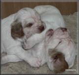 Little Helen pups  120124 014.jpg