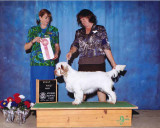Gigi  120804 001 Puppy Group 1.jpg
