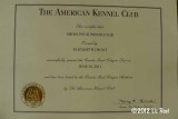 Walter CGC Certificate.jpg