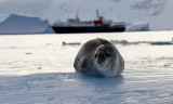 Leopard-Seal-and-ship-IMG_5933-Cuverville-14-March-2011.jpg