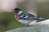 OHIO SPRING 2011: Birds