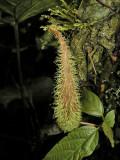 Furry Plant
