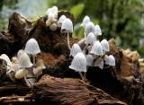 Mushroom sp. (Ecuador)