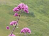 kwt_2011-07-25_027.jpg